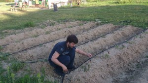 Posizioniamo l'impianto goccia a goccia a terra!