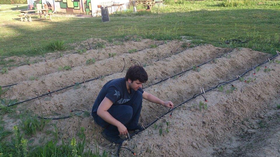 Daybyday eigenlab for Irrigazione a goccia per pomodori